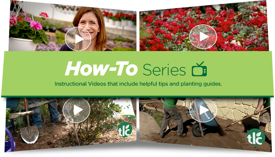 TLC How-To Video Series