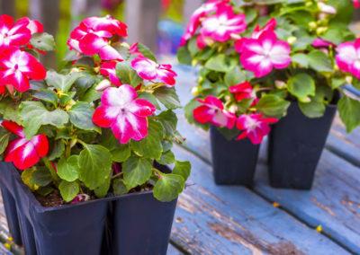 August Lawn & Garden Tips