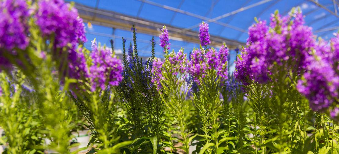 TLC Garden Centers | Greenhouse