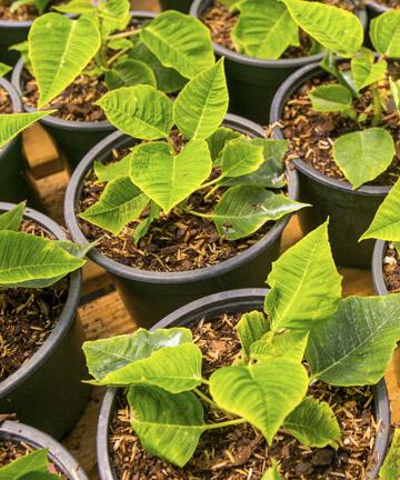 Oklahoma Grown Plants