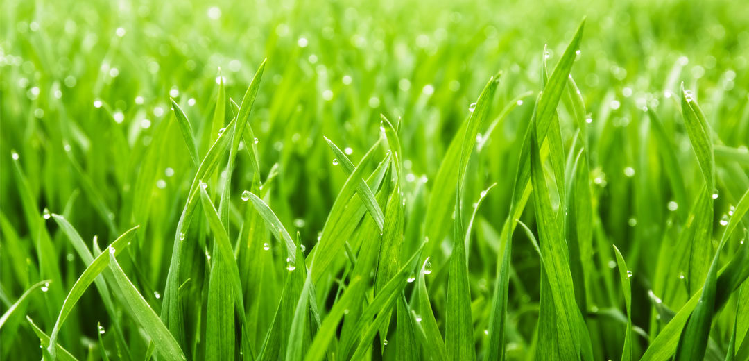 Creating a beautiful green lawn