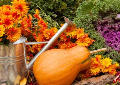 September Lawn & Gardening Tips