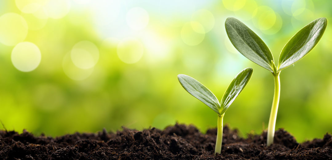 Vegetables:  Planting Your Seeds
