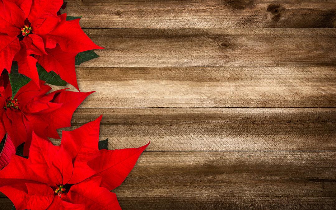 16 December Lawn & Garden Tips