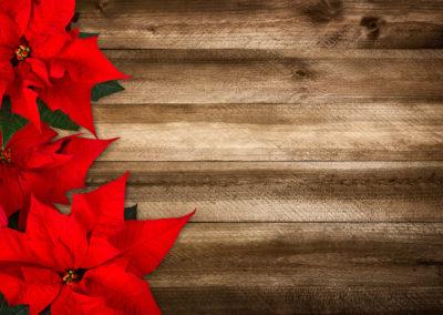 December Lawn & Garden Tips