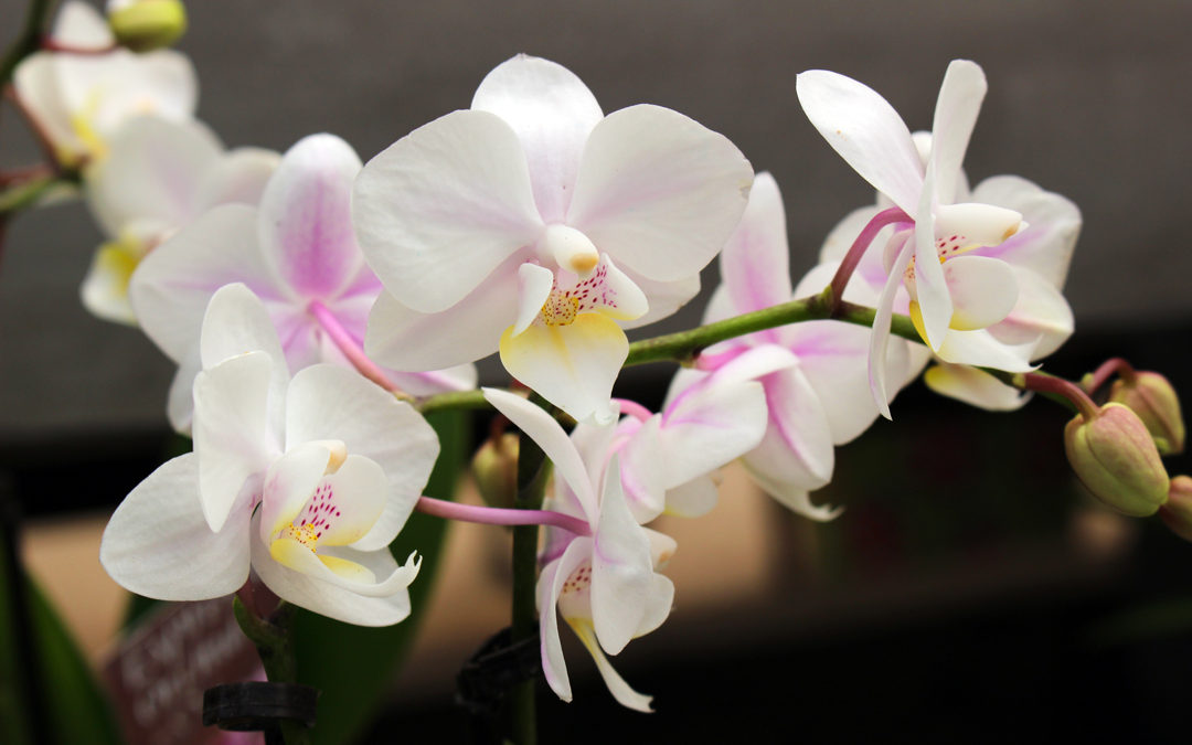 Orchid Care Made Easy