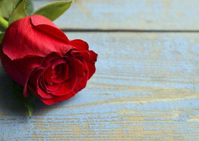 February Lawn & Garden Tips