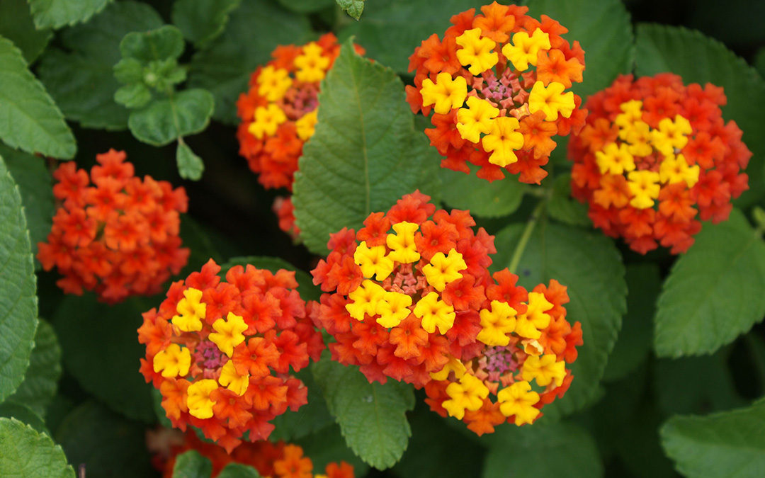 Amazing Annuals for Instant Color