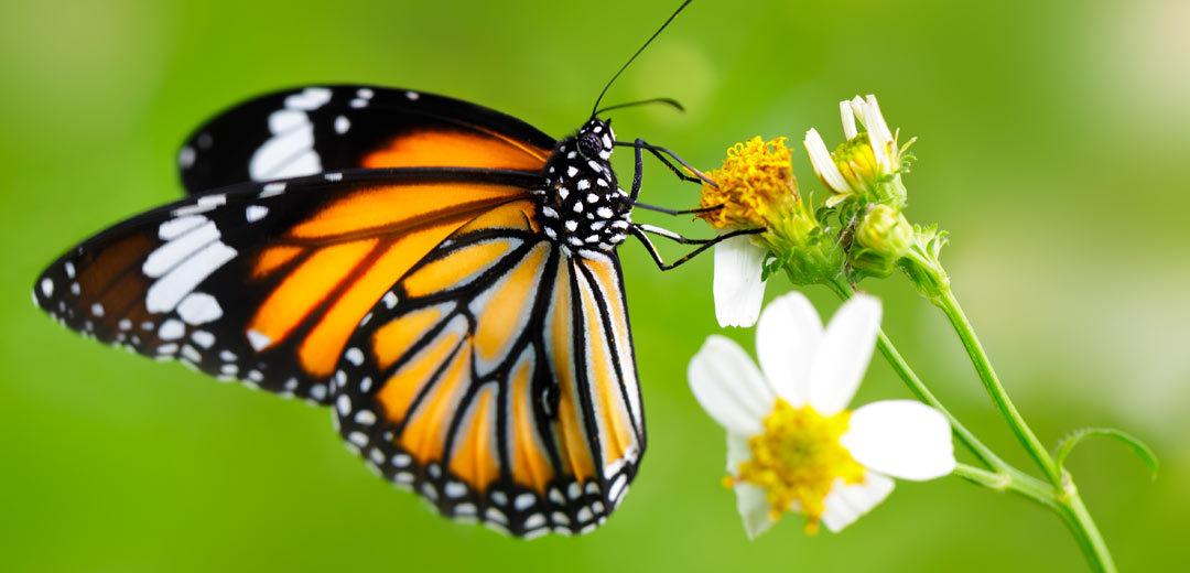 Bees, Birds & Butterflies