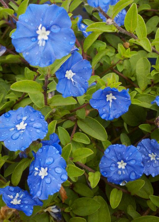 Blue Daze Annual