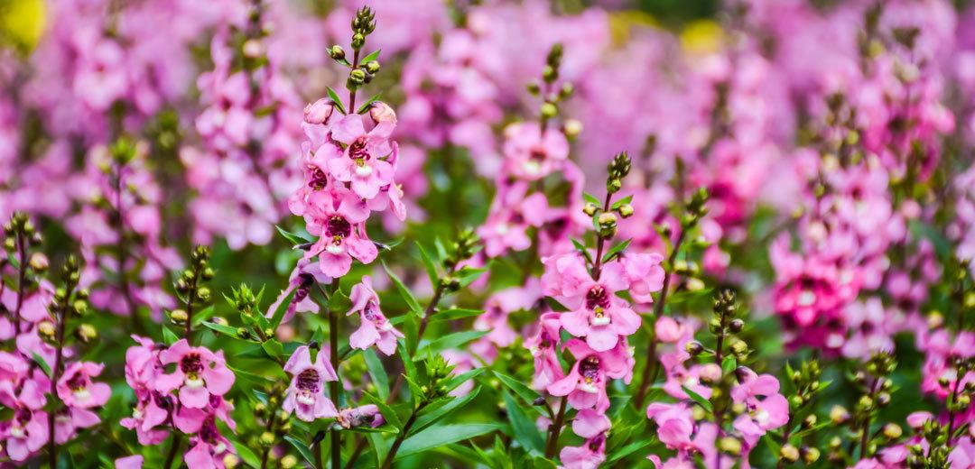 June Lawn & Garden Checklist