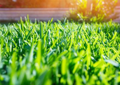Creating a Beautiful Green Lawn