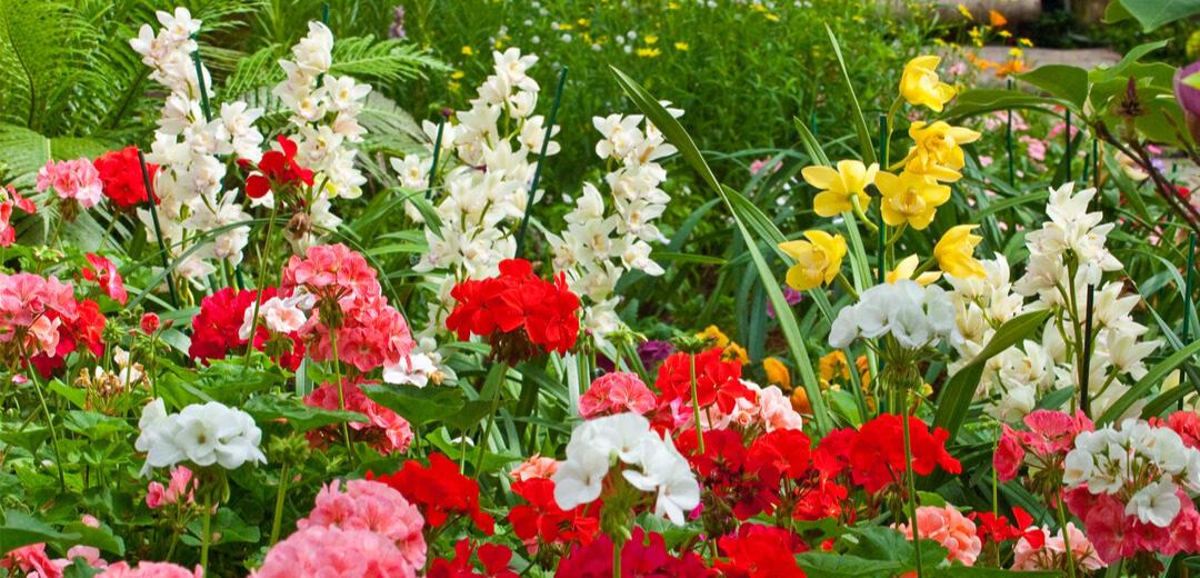Keeping Plants Happy in a Heatwave