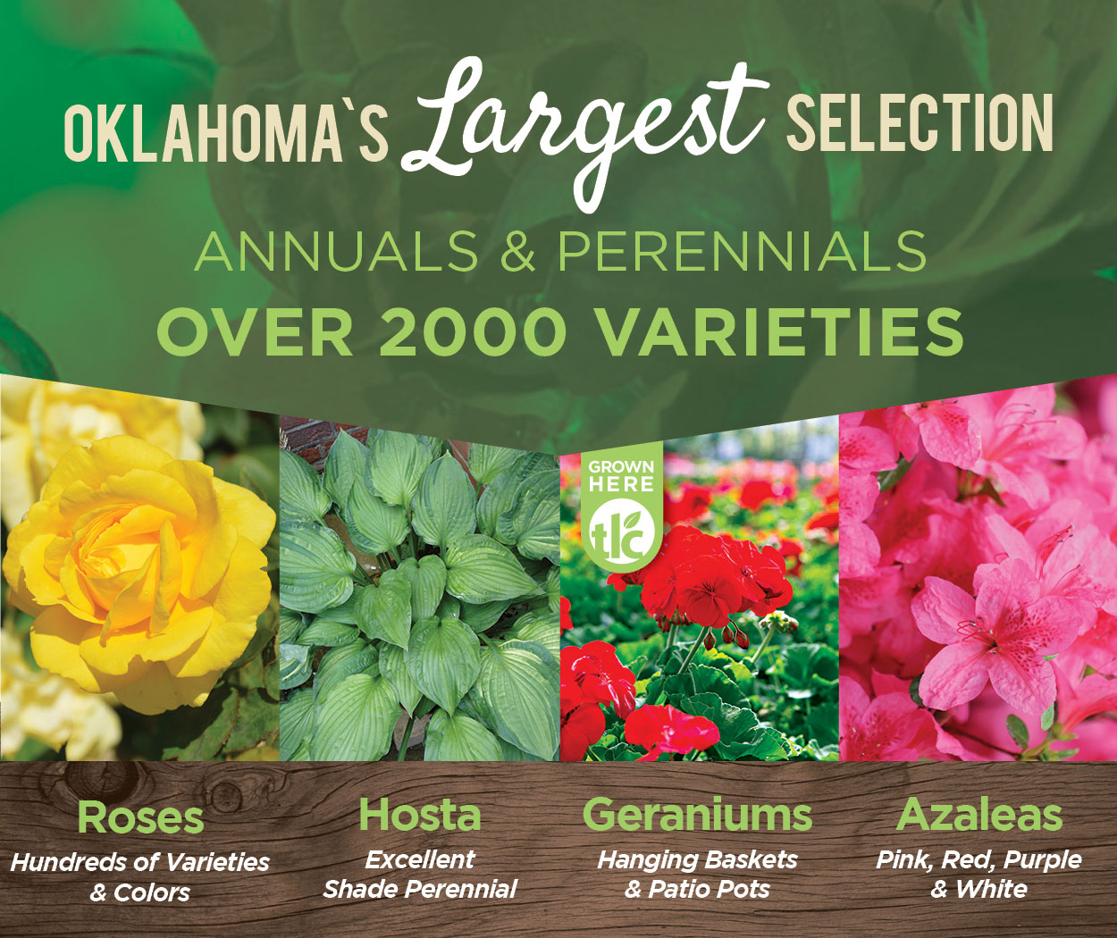 Oklahoma's Largest Selection of Annuals and Perennials