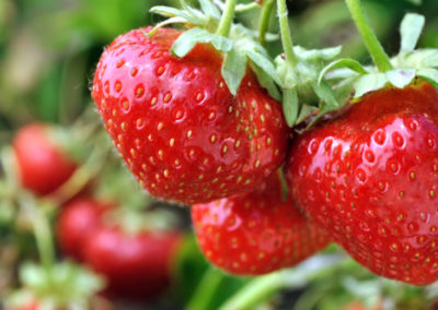 Scrumptious Strawberries
