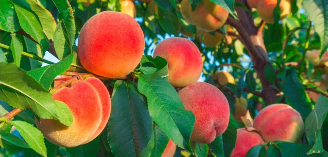 Fruit Planting: Tips for Success