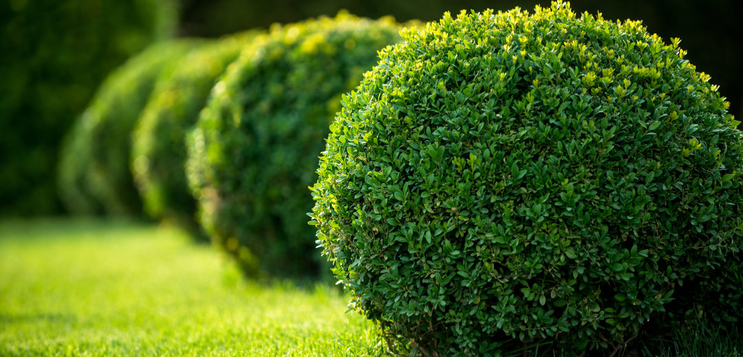 Insect Protection for Your Trees and Shrubs