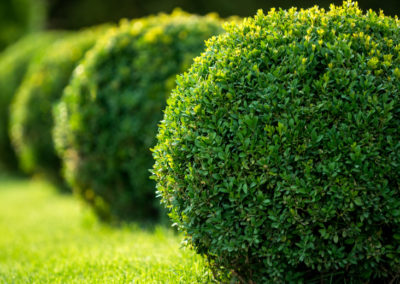 Insect Protection for Your Trees & Shrubs