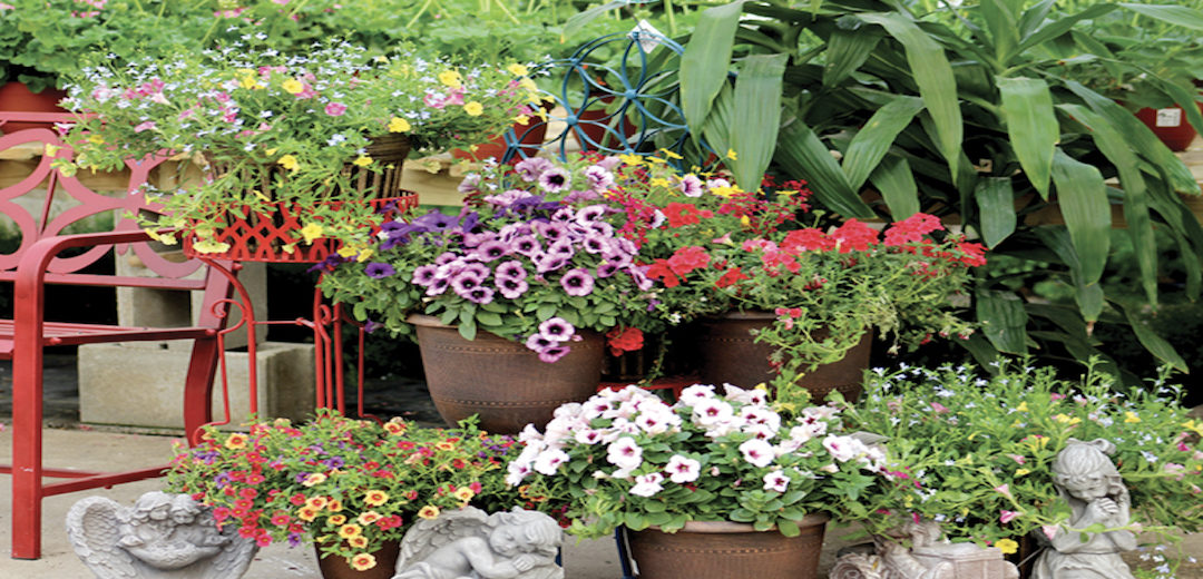 Two Keys to Container Garden Success