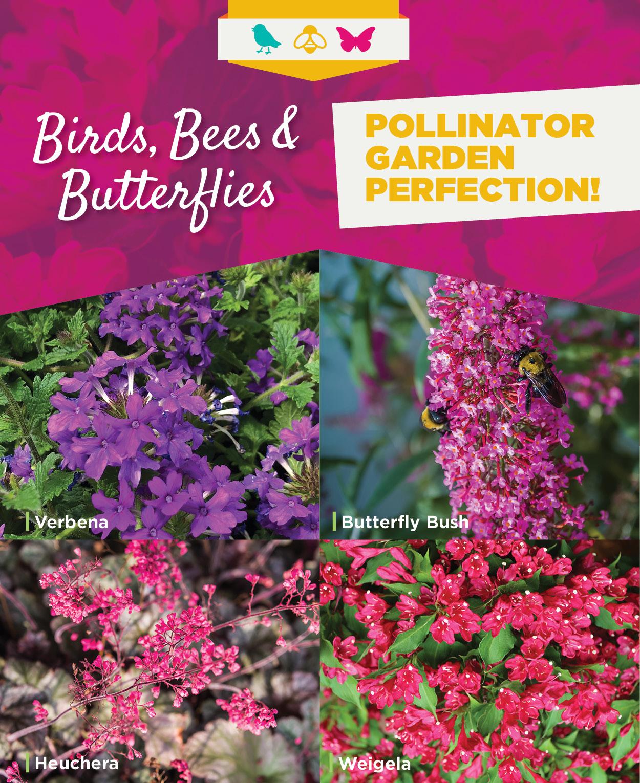 Bees Birds Butterflies