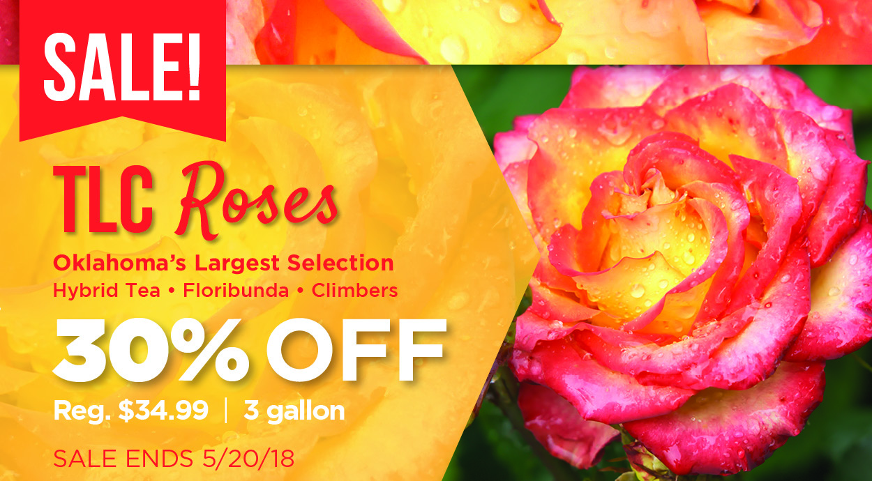 Roses Sale