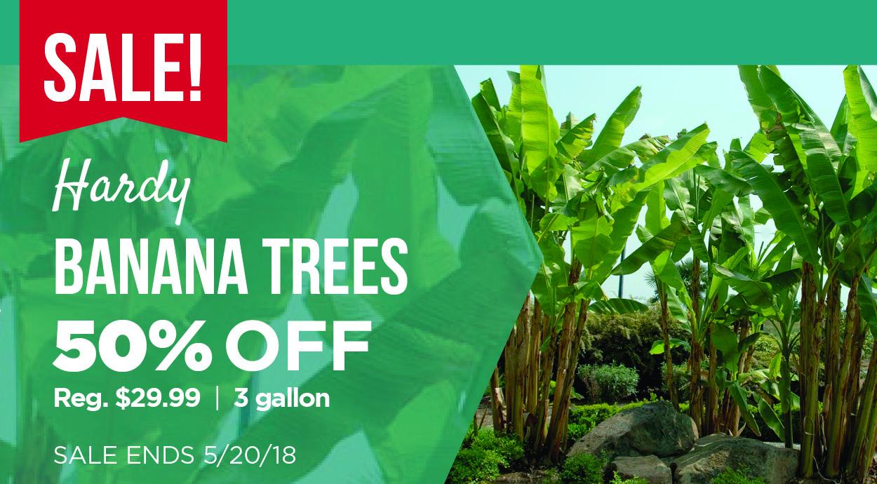 Banana Tree Sale
