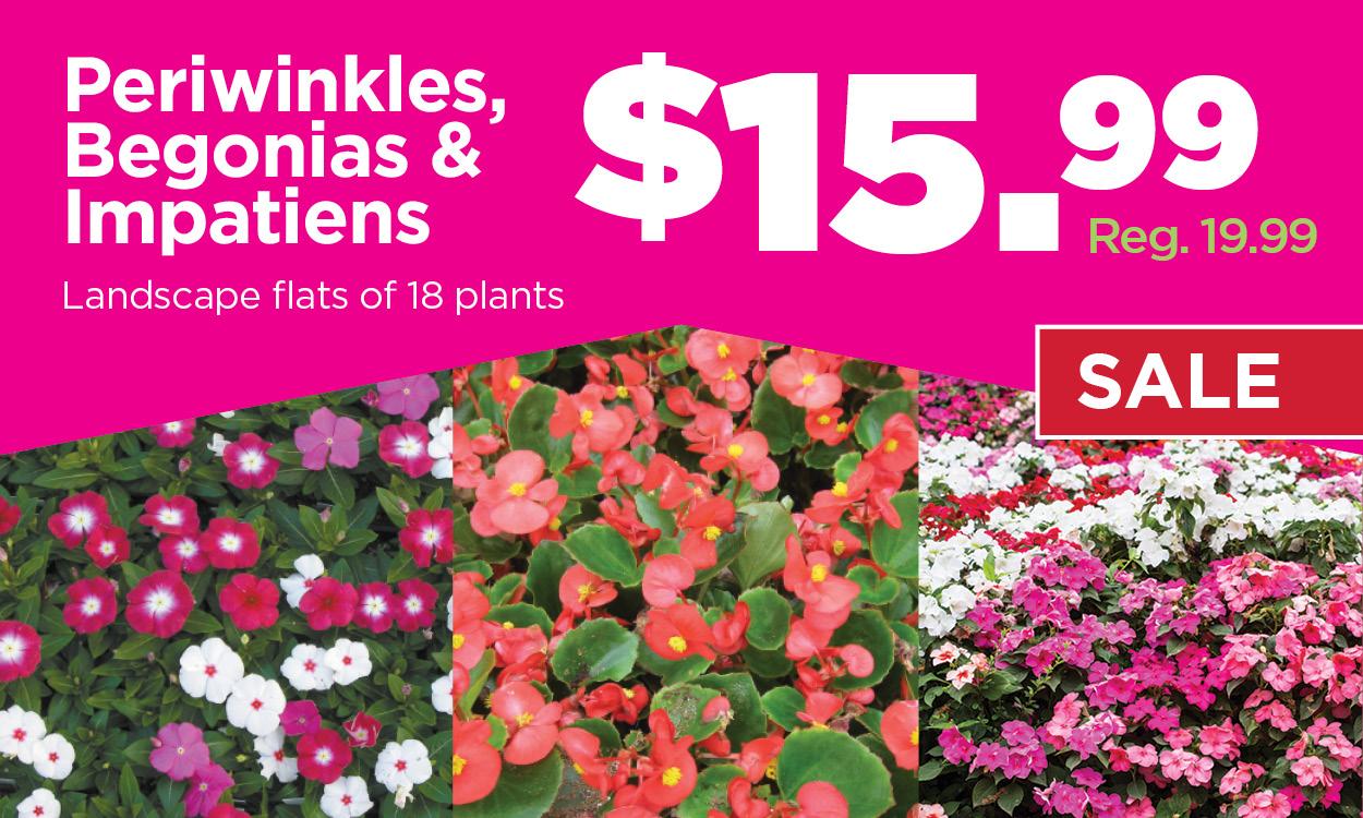 Periwinkles, Begonias & Impatiens Sale