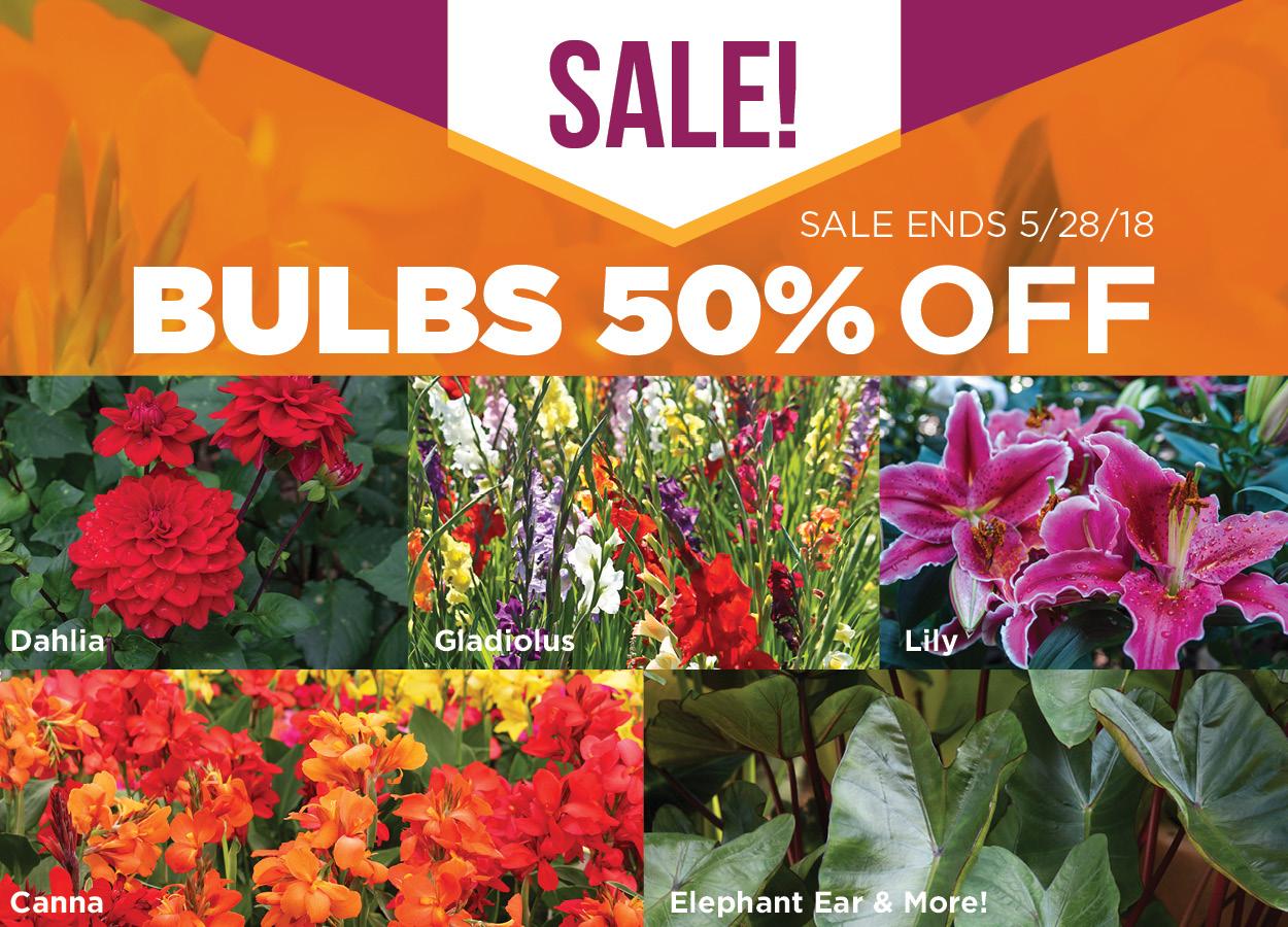 Bulb Sale