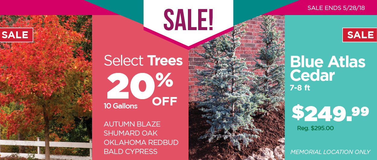 Sale Select Trees & Blue Atlas