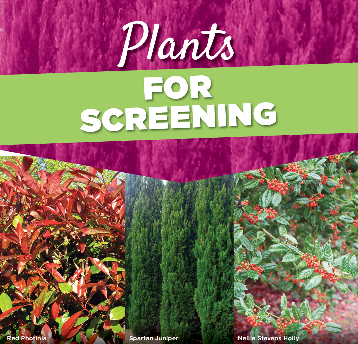 Plants for Screening