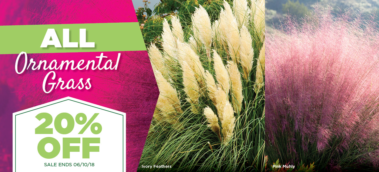 Ornamental Grass Sale