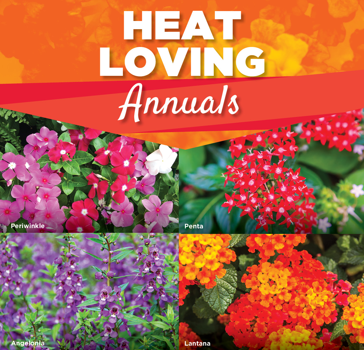 Heat Loving Annuals