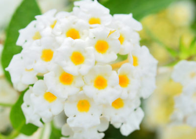 Heat Loving Flowers