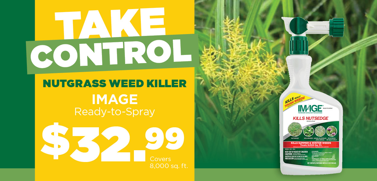 Nutgrass Weed Killer