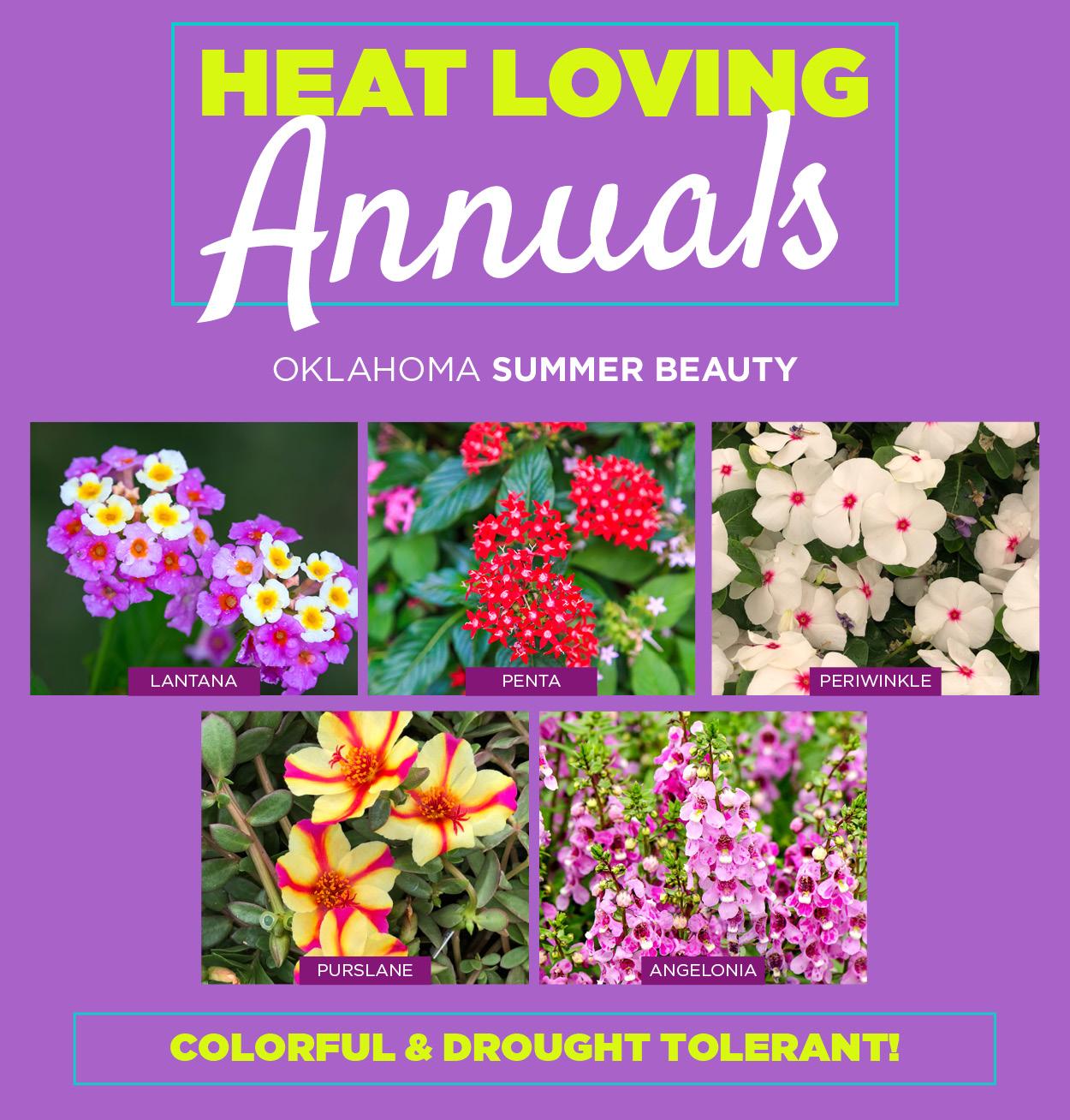 Heat Loving Annuals