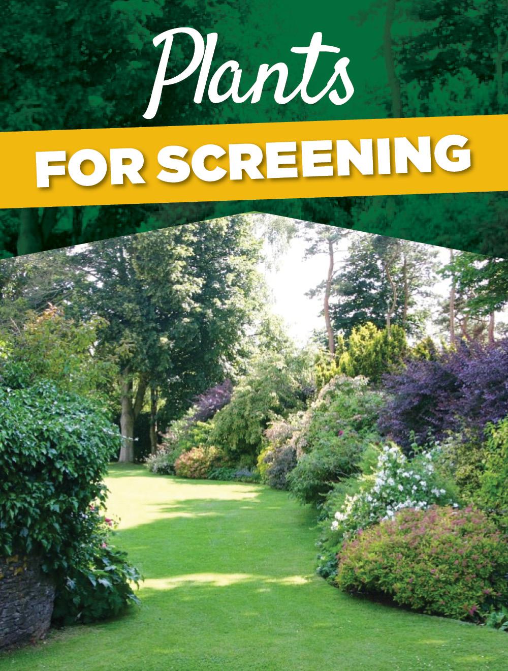 Plants for Screening