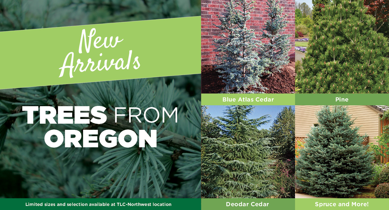 Trees from Oregon | TLC Garden Centers