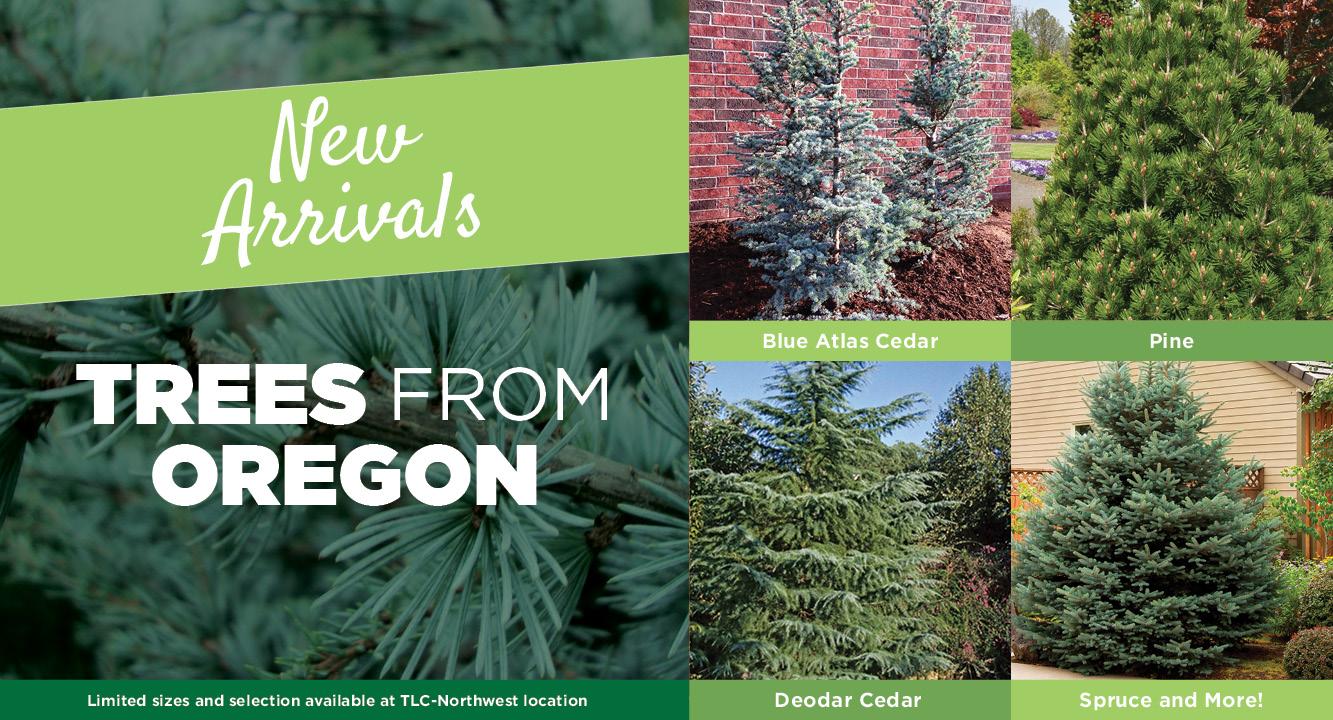 New Arrivals - Trees