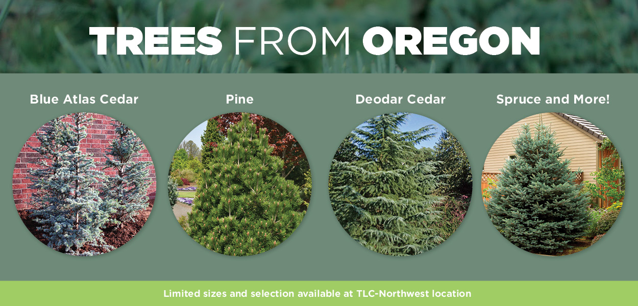 Trees from Oregon