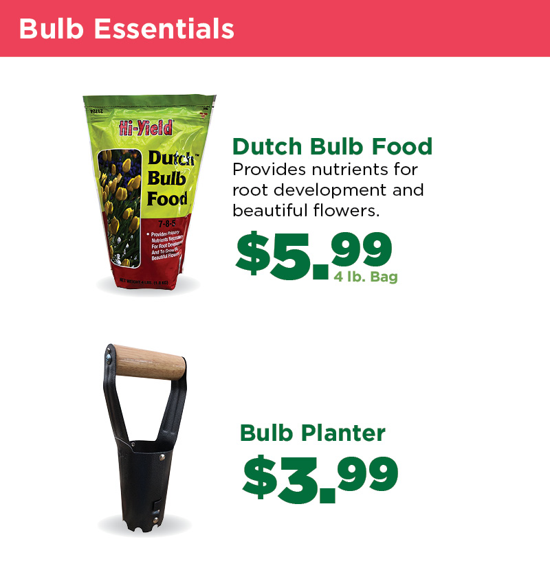 Bulb Essentials