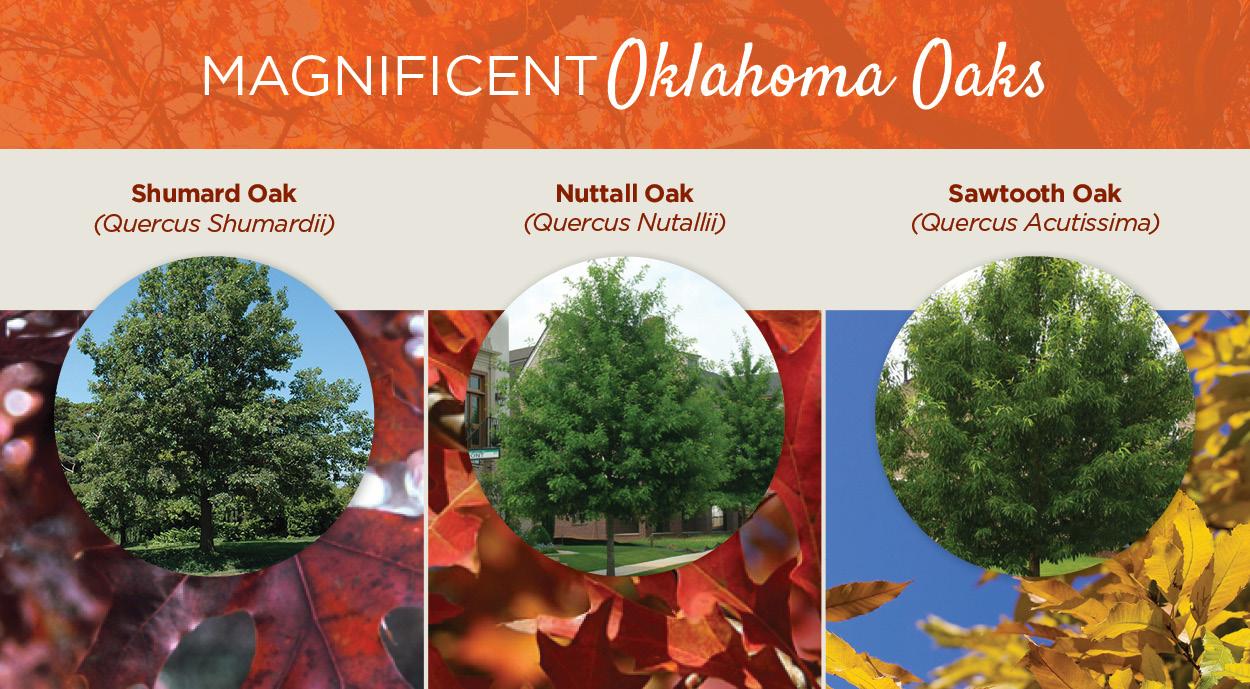 Oklahoma Oaks