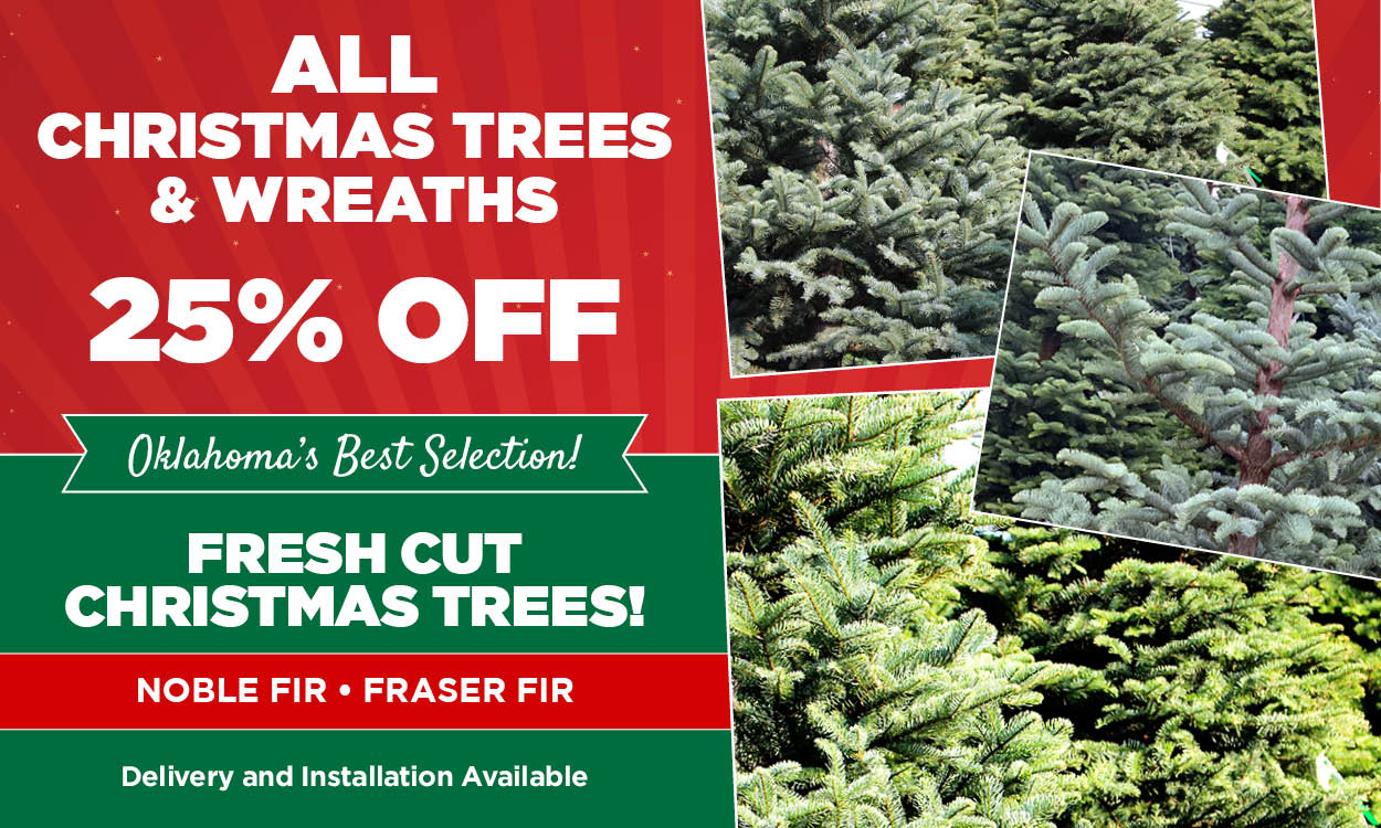25% Off Christmas Trees & Wreaths