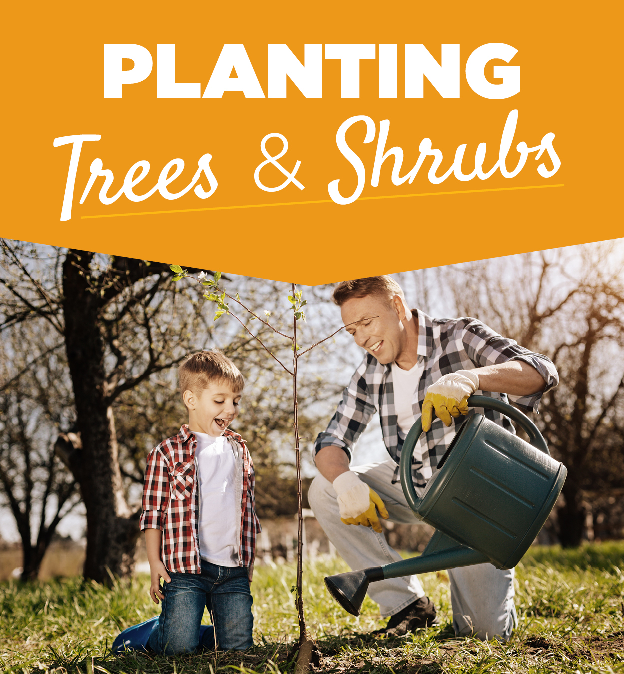Planting Trees & Shrubs