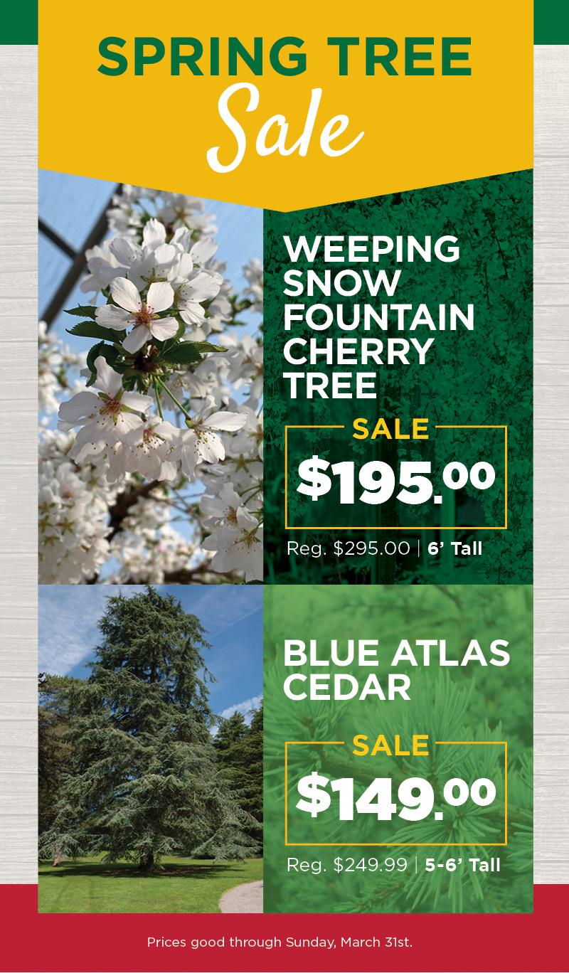 Spring Tree Sale