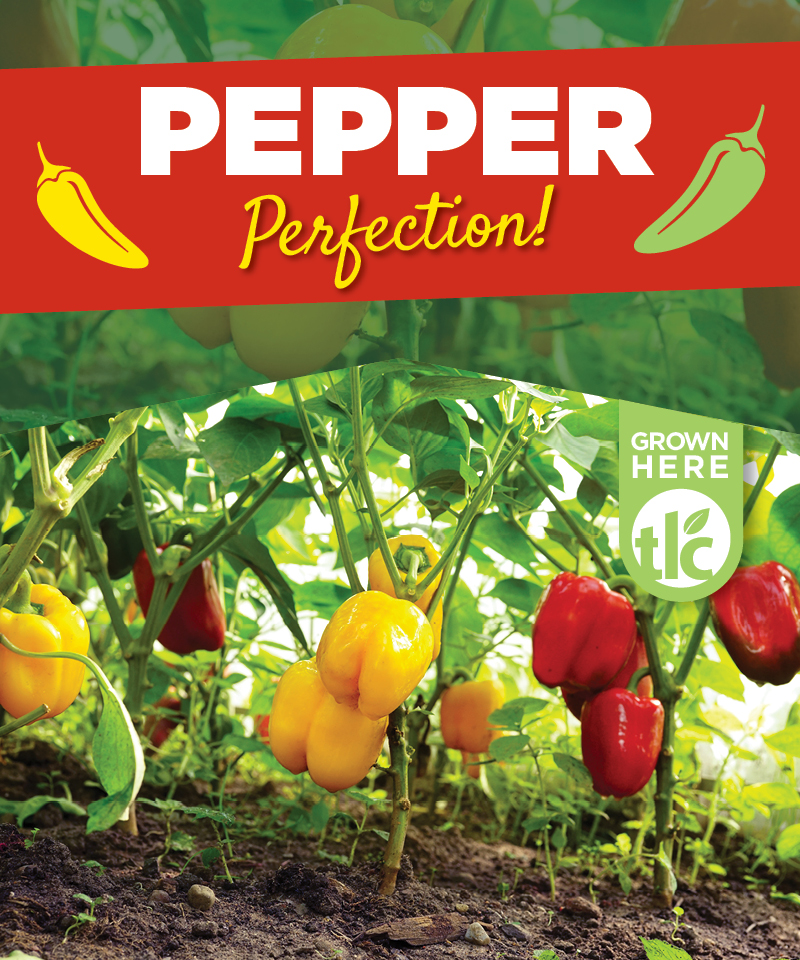 Pepper Perfection