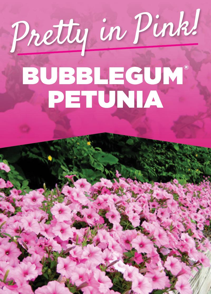 Bubblegum Petunia
