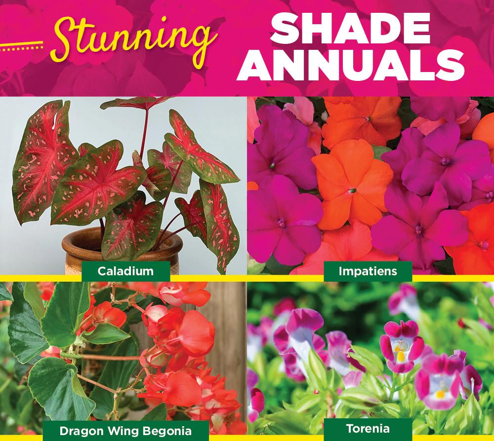 Shade Annuals