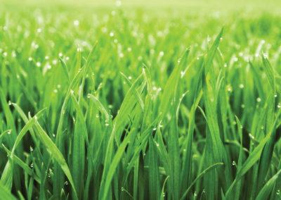 Free Landscape Beds of Weeds & Grass