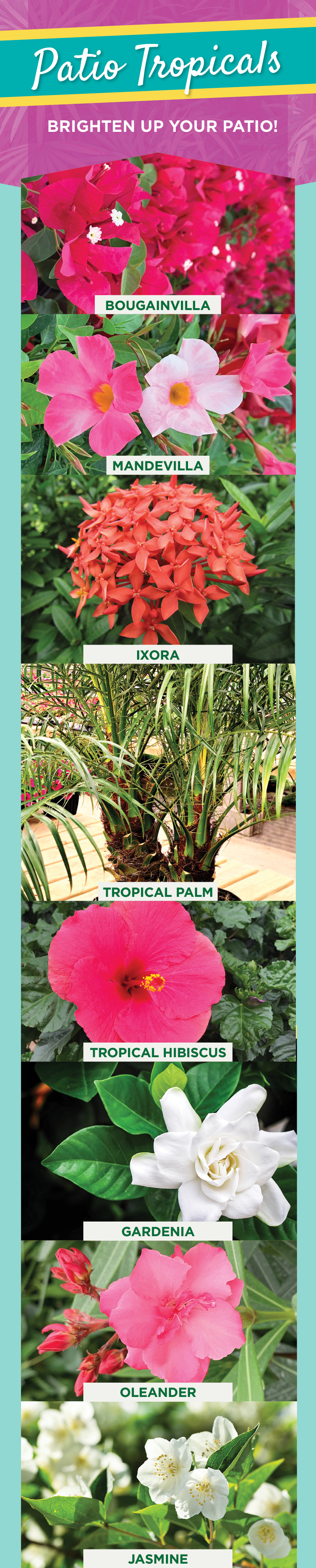 Patio Tropicals