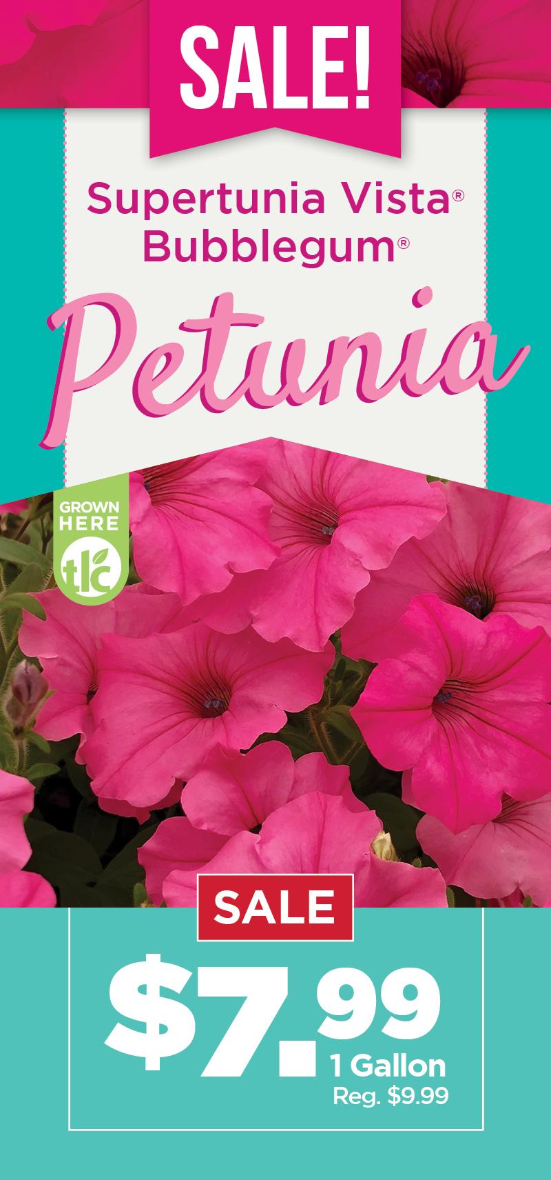 Petunia Sale
